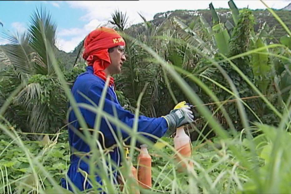 Le monarque de Tahiti menacé par la lutte contre la fourmi de feu - Polynésie la 1ère