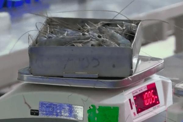 Aquaculture au ralenti avec le confinement covid 19