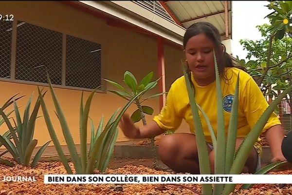 Le collège Maco Tevane joue la carte de la permaculture