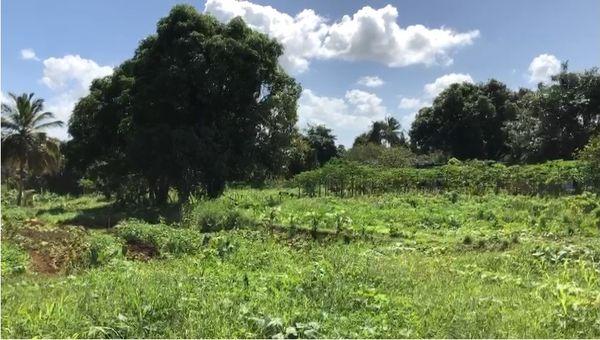 Le Pré Vert, exploitation agricole en agroforesterie  - Birmingham, Baie-Mahault