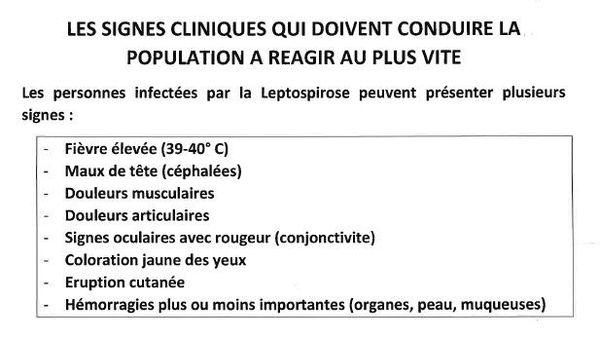 signes cliniques de la leptospirose