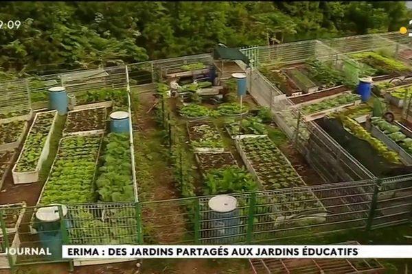 Jardin partagé : des légumes pour tous