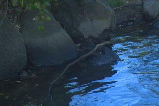 Pollution rivière