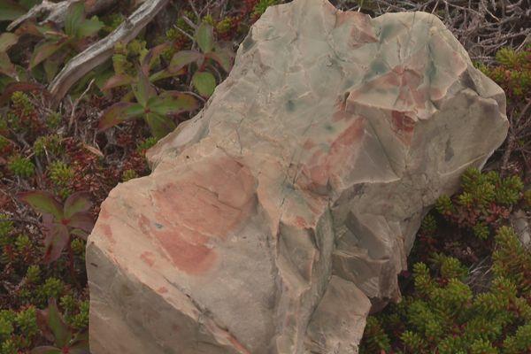 Découverte d'un nouveau site archéologique près de l'étang du Bois brûlé à Saint-Pierre