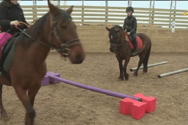 L'Equifun ou comment apprendre à diriger son cheval tout en s'amusant