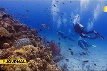 Le corail en péril