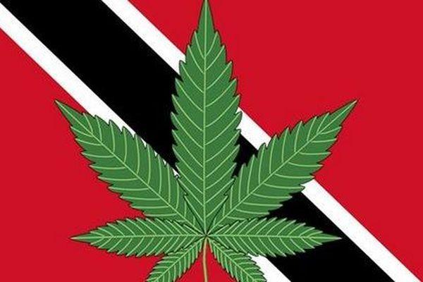 Trinidad et Tobago démarre des consultations nationales pour décriminaliser le cannabis