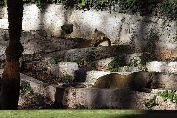 Fosse aux lions Barcelone