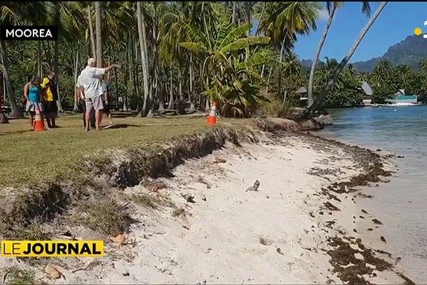 Une opération de végétalisation contre l'érosion des plages
