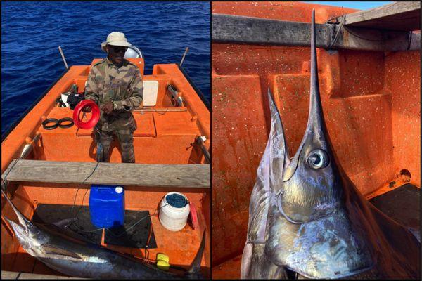 Montage pêche poisson