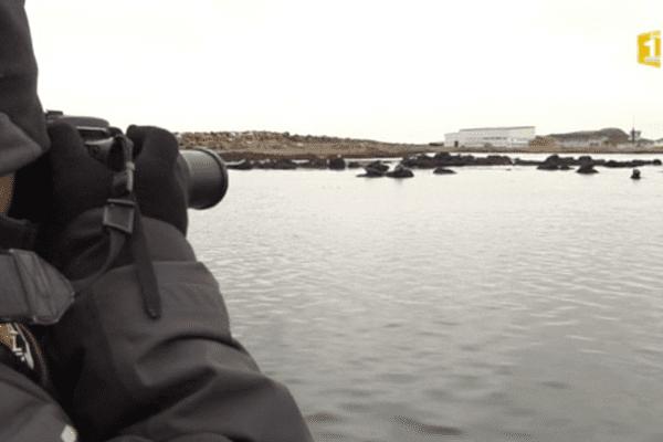 mission comptage phoques
