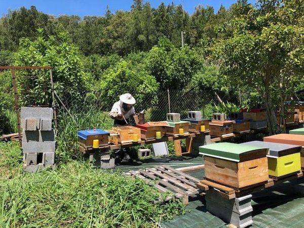 Jean-Paul Cascade est apiculteur à Ruisseau Blanc à La Montagne.