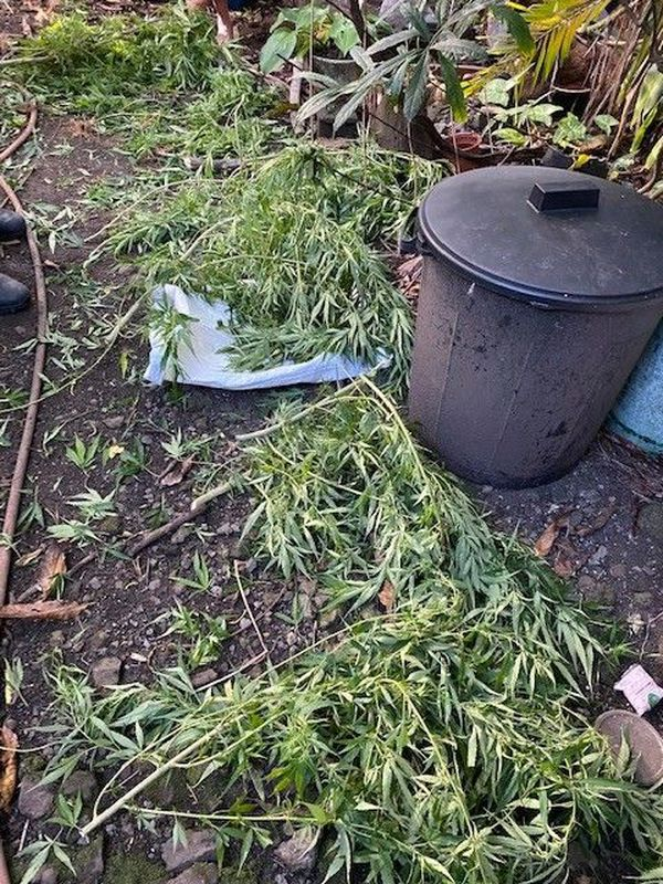 saisie zamal stupéfiants herbe séchée 140121