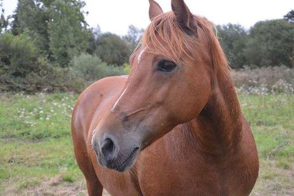 Morsure de cheval