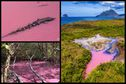 La mangrove du Diamant est de nouveau rose