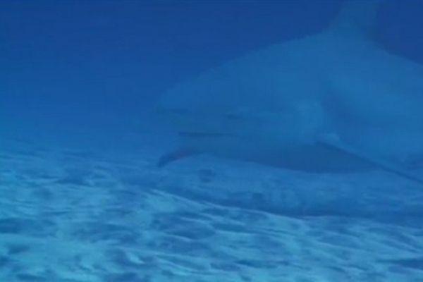 20140604 Requin
