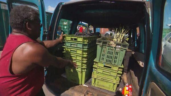 Agriculteur Lifou 2