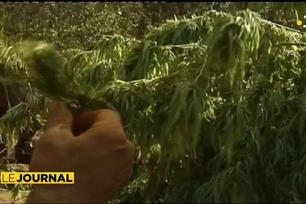 «L'appel du 18 joints », timide rassemblement pour la dépénalisation du cannabis