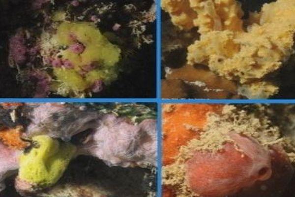 éponge , mollusques organisme marin
