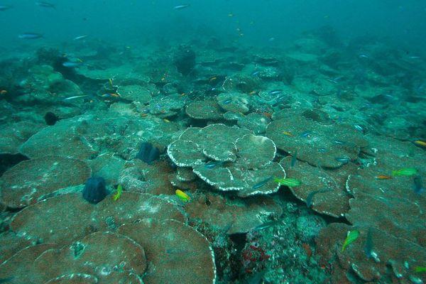 Terrasse corallienne en Polynésie française