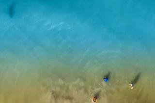 Requin approchant de baigneurs aux Etats-Unis