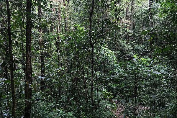 Guyane, sur la piste des orpailleurs clandestins 8