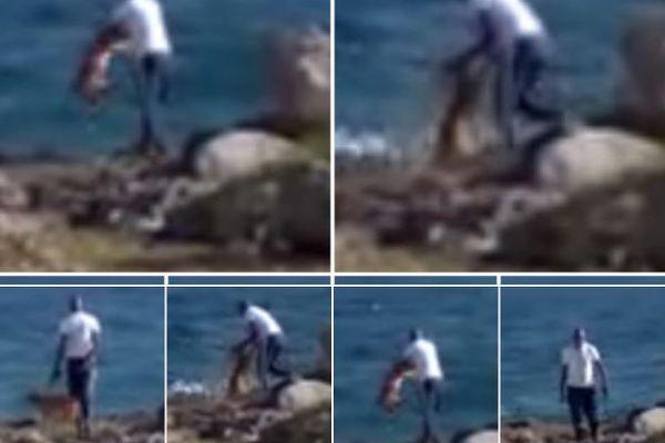 chien falaise