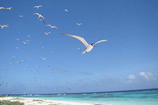 L'un des atolls d'Entrecasteaux.