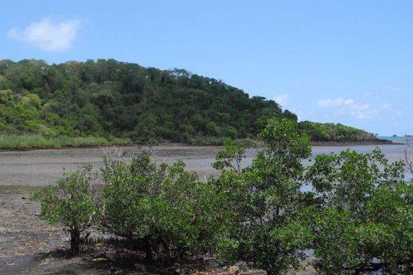 lagon et mangroves
