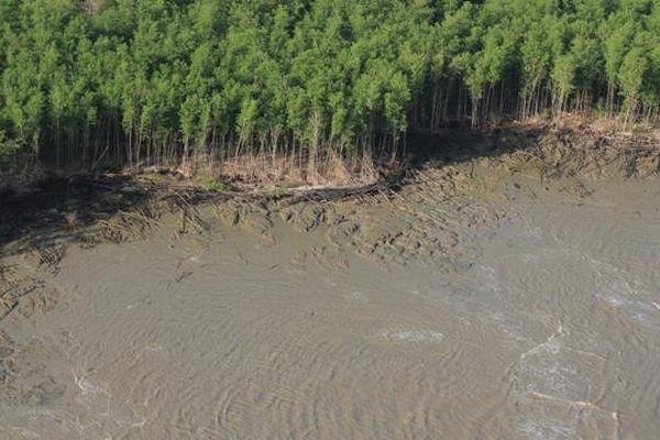 La mangrove de Guyane