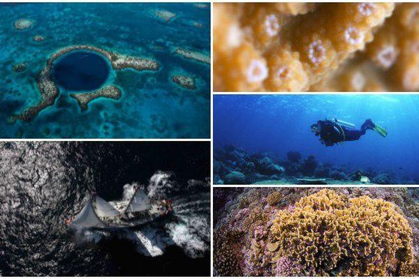 Tara Pacific, expédition au cœur des récifs coralliens