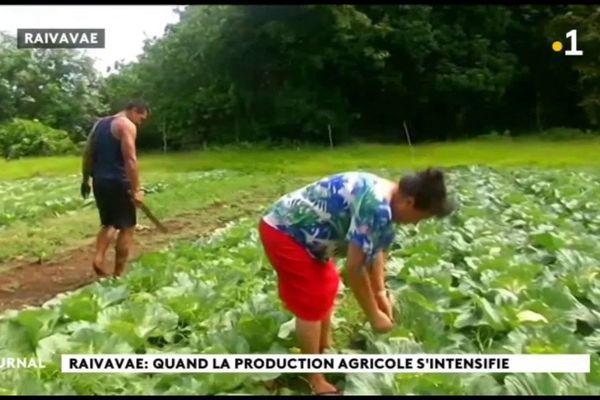 Raivavae, terre agricole de générations en générations