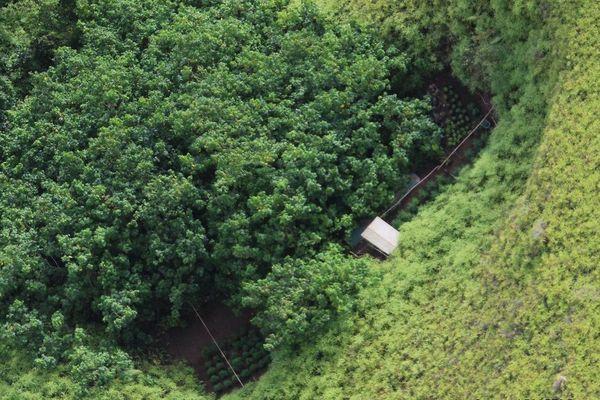 L'hélicoptère, arme redoutable de lutte contre les plantations illicites