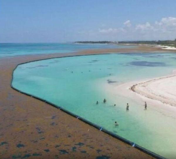 Barrage anti sargasses Punta Cana République dominicaine