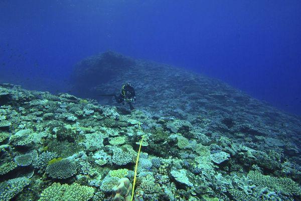 Surveillance des récifs coralliens