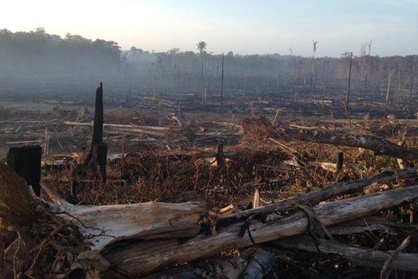 Déforestation en Guyane