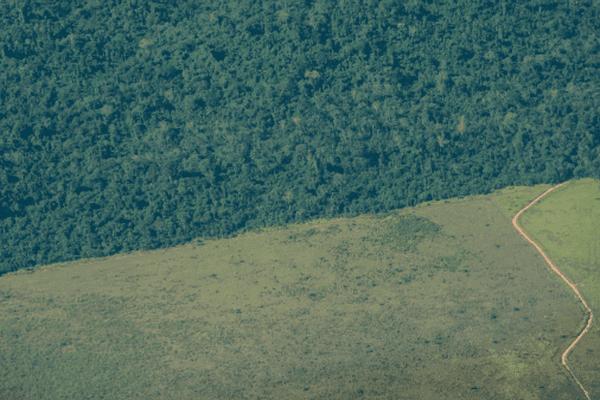 Déforestation au Brésil, dans l'Etat du Para