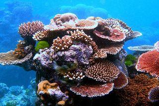 Barrière corail Australie