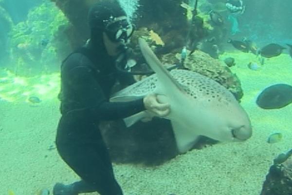Aquarium nouméa