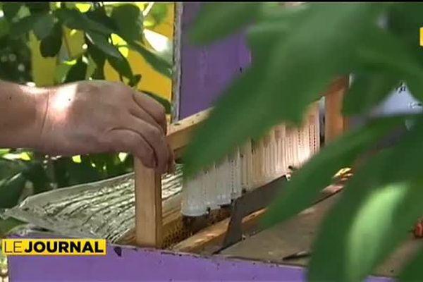 Les apiculteurs de Raiatea réclament plus de protectionnisme
