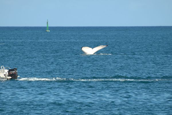 baleines papeete 18 10 2013