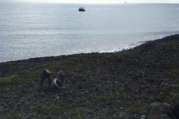 Opération nettoyage terrestre et aquatique littoral du Port ramasseurs plage
