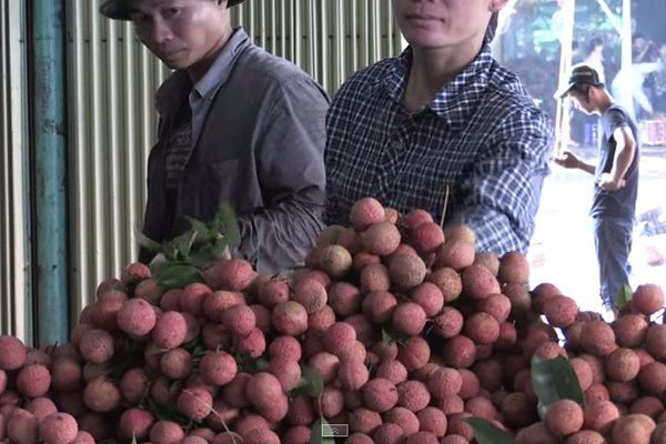 Letchis Vietnam AFP