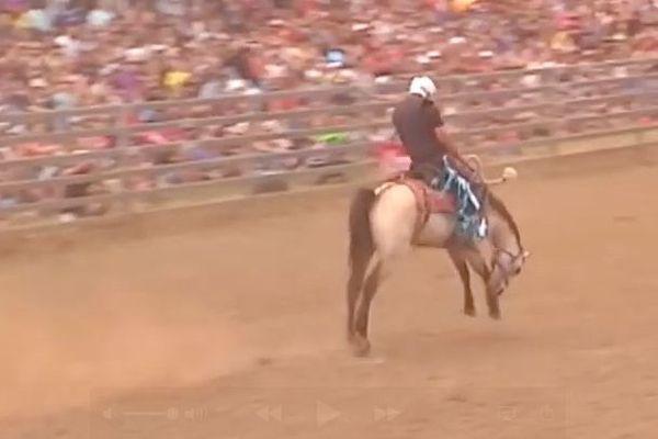 cheval rodéo