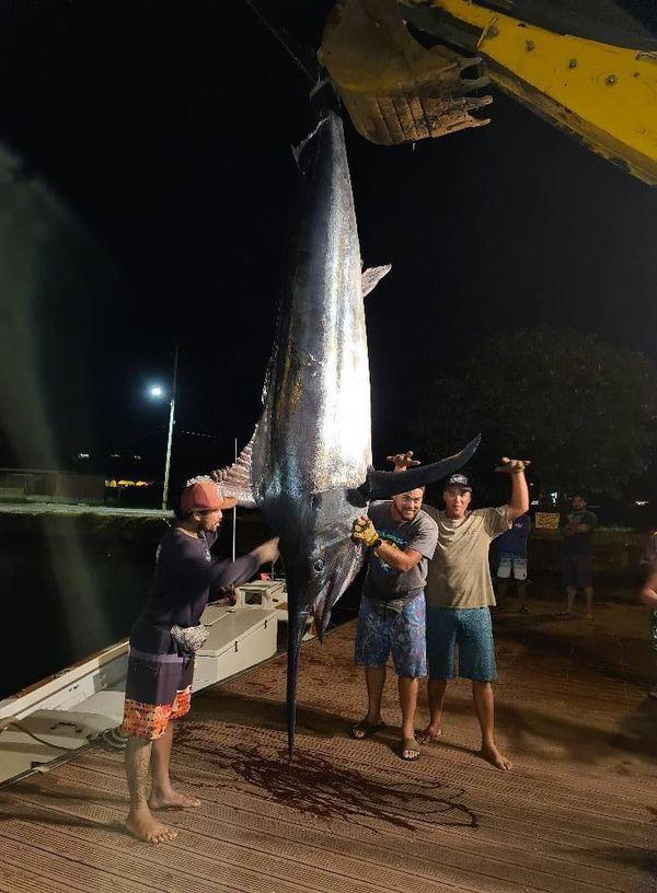 Black marlin de 480 kg