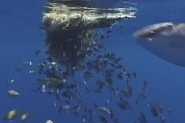 Pêche tahiti
