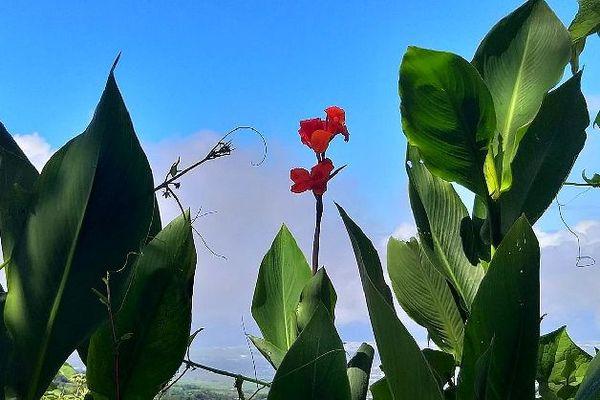 Ciel bleu, juage et fleur rouge