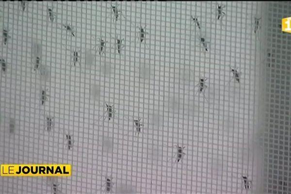 La dengue continue de sévir en Nouvelle Calédonie