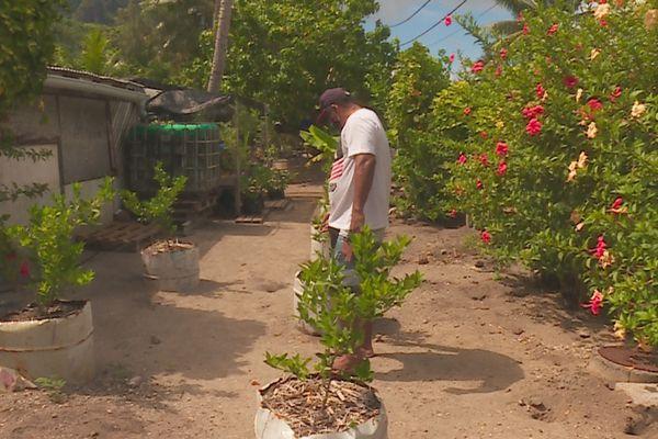 agriculture Bora Bora / potager / faapu