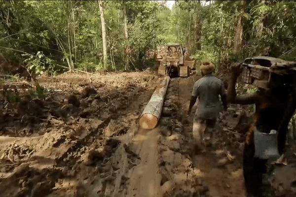 Déforestation en Papouasie-Nouvelle-Guinée